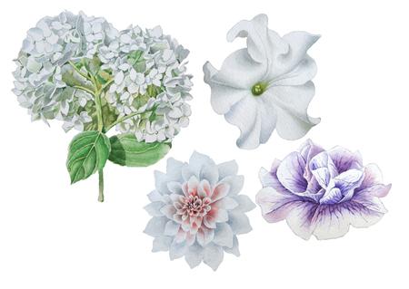 Set with flowers. Petunia. Dahlia. Hudrangeya Watercolor illustration Hand drawn Stok Fotoğraf