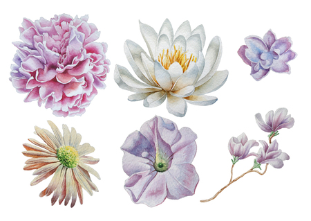 Set with flowers. Rose. Peony. Lily. Watercolor illustration. Hand drawn. Stock Photo