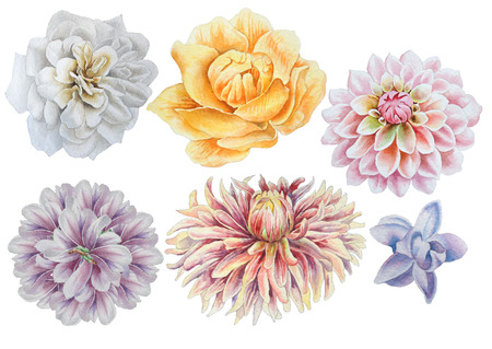 Set with flowers. Rose. Peony. Dahlia. Watercolor illustration. Hand drawn. Imagens