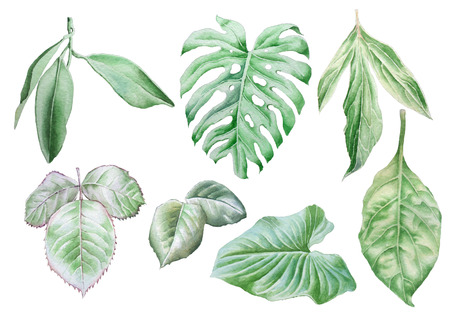 vegetate: Set with leaves. Watercolor illustration. Hand drawn.