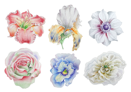 Set with flowers. Rose. Peony. Lily. Iris. Anemone. Pansies. Watercolor illustration. Hand drawn.