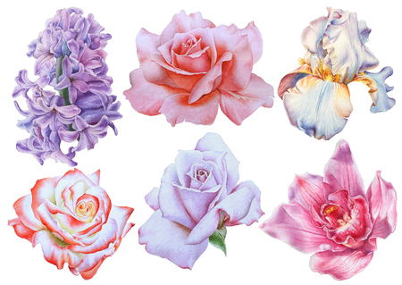 Set with bright flowers. Rose. Iris. Lilac. Orchid. Watercolor illustration. Hand drawn.