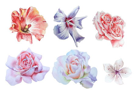Set with bright flowers.  Rose.  Hibiscus. Watercolor illustration. Hand drawn.