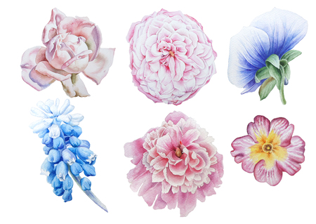 Set with bright flowers.  Rose. Pansies. Hyacinth. Peony. Primula. Watercolor illustration. Hand drawn.