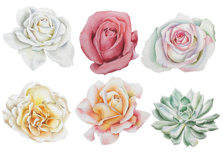 Set with watercolor flowers. Rose. Succulents. Hand drawn.