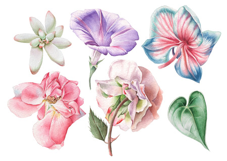 Set with watercolor flowers. Rose. Petunia. Orchid. Succulent. Hand drawn. Stock Photo