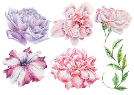Set with watercolor flowers. Rose. Peony. Petunia. Leaves. Hand drawn. Stock Photo