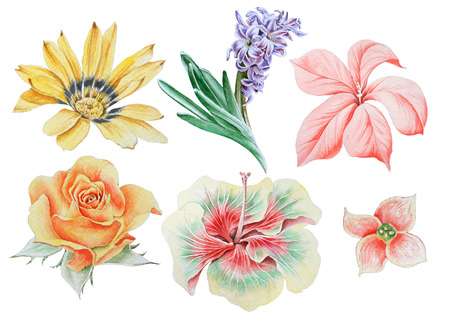 Set with watercolor flowers. Heliopsis. Hyacinth. Rose. Hibiscus. Hand drawn. Banco de Imagens