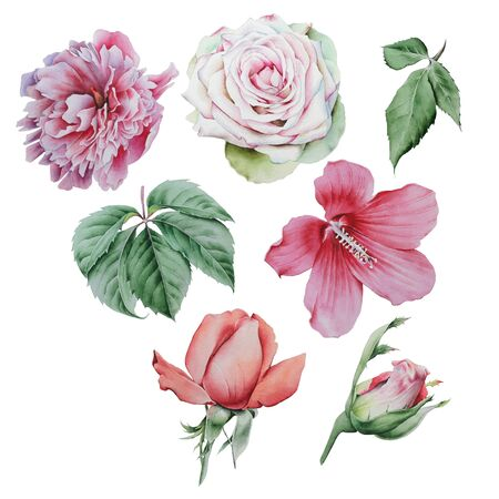 Set with watercolor flowers and leaves. Rose. Peony. Hibiscus. Leaves. Hand drawn.