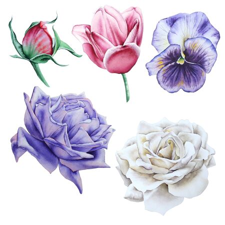 Set with watercolor flowers. Hand drawn. Archivio Fotografico - 126288620