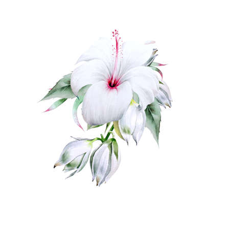 Watercolor bouquet with flowers. Yucca. Hibiscus. Illustration. Hand drawn. 版權商用圖片
