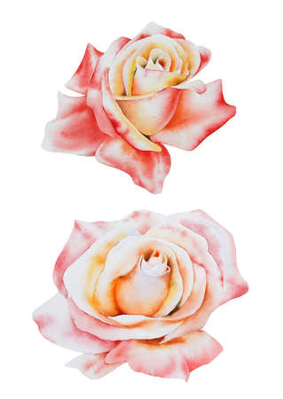 Set with watercolor roses. Hand drawn.