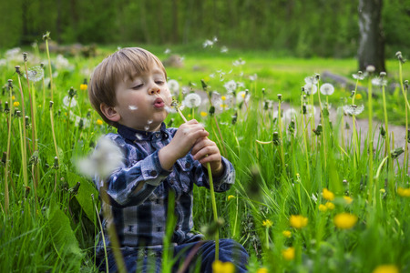 dandy: Cute child playing in a field with dandy lions