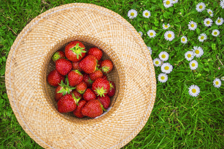 harvests: top view of a hat filled with strawberries Stock Photo