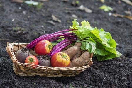 home grown: Basket of home grown vegetables
