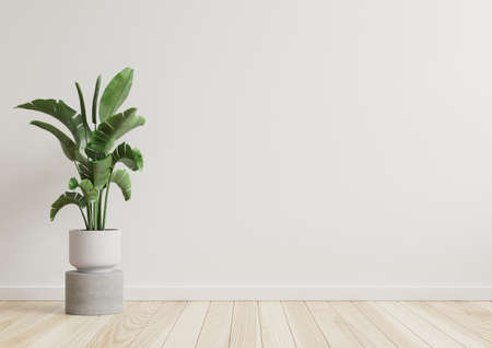 Empty room white walls with beautiful plants sideways on the floor.3d rendering