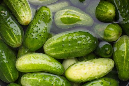 green cucumbers in water Stock Photo