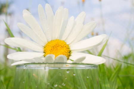 Big white daisy on top of glass in grass Stock Photo