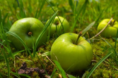Four green apples in grass Stock Photo