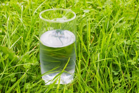 Glass of clean water staying in bright green grass