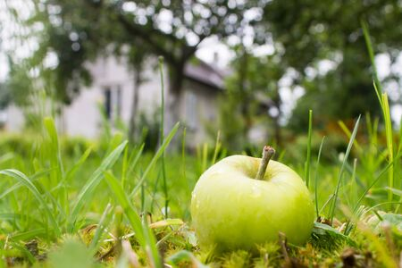 Wet apple in grass near house