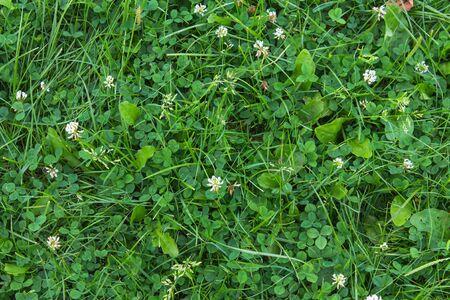 Hohen Grünen Gras Auf Weißem Hintergrund Lizenzfreie Fotos, Bilder ...