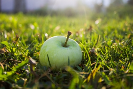 One green apple in grass in garden