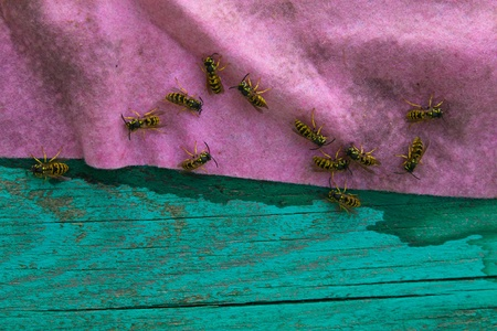 many wasps on pink - green background