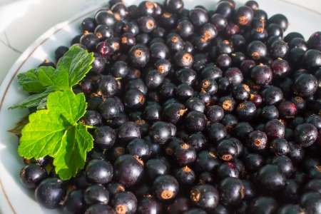 Black currants on white plate with green leaves