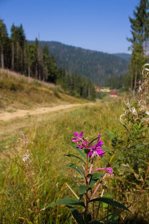 pink flower near road in mountains covered with trees photo