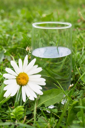 glass of fresh water on green grass photo