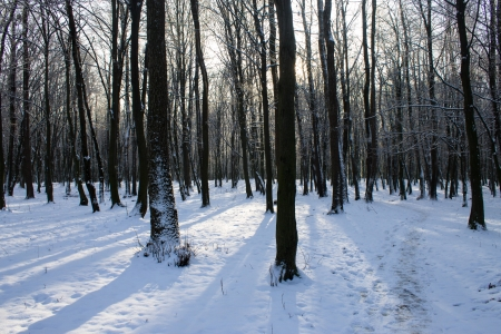 shadows in snowy wood Stock Photo