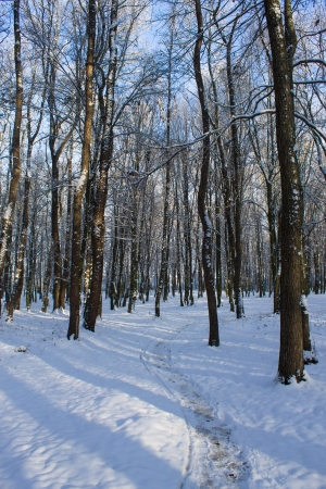 snowy winter forest photo