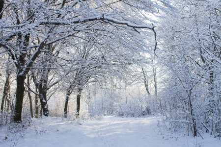 white winter forest in snow on blue sky background photo