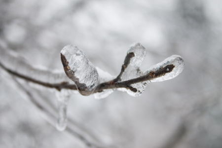 frozen branch of tree