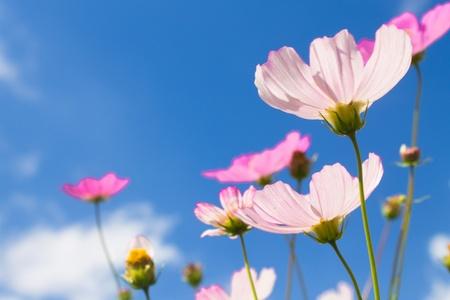 flowers on blue sky background