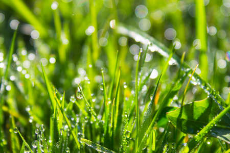 green grass background Stock Photo - 19263958