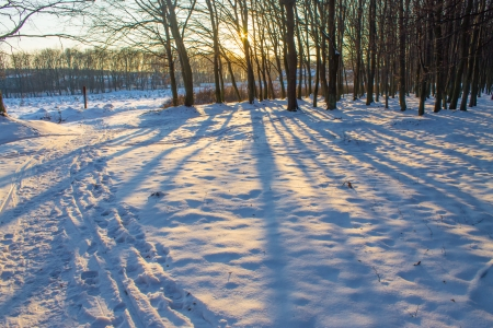 lights and shadows in winter forest Stock Photo