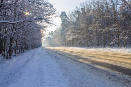 road in winter forest photo