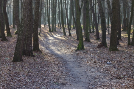 path in forest photo