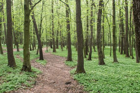 path in green spring forest Stock Photo