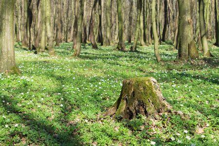 Sunny spring forest landscape