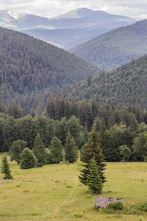 green summer mountains landscape