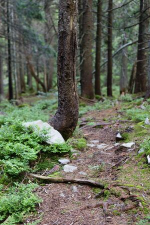 path in green summer forest Stock Photo
