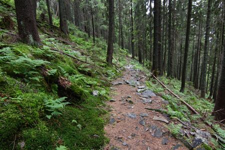 path in mountain forest