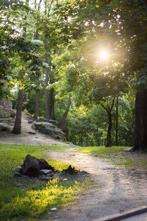 path in summer park