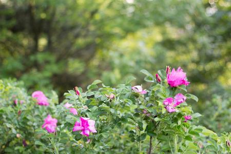 pink flowers on green bush