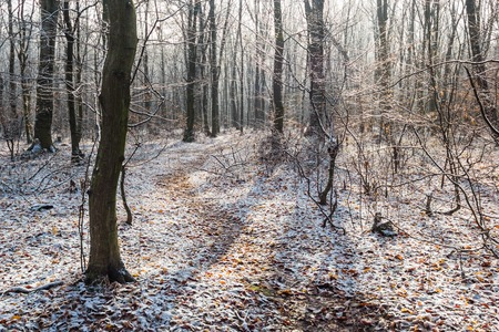 narrow path in white snow in winter forest