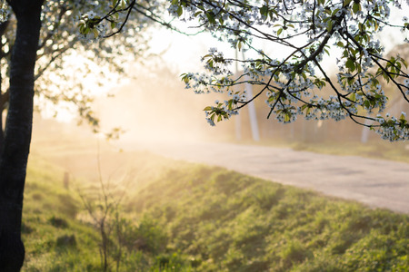 Beautiful spring morning misty landscape of tree blossom and dew on green grass