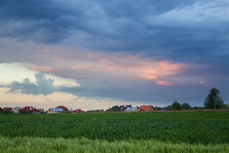 Beautiful sunset landscape over green lush of wheat field Stock Photo